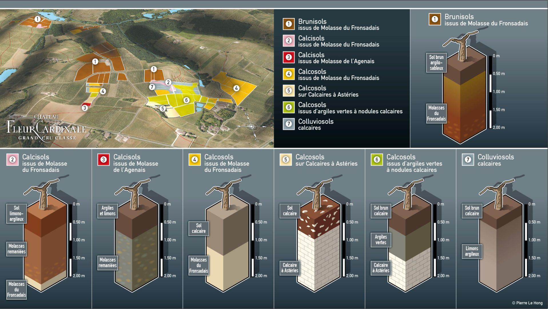 Les 7 types de sols et sous-sols de Château Fleur Cardinale - © P. Le Hong Infographie