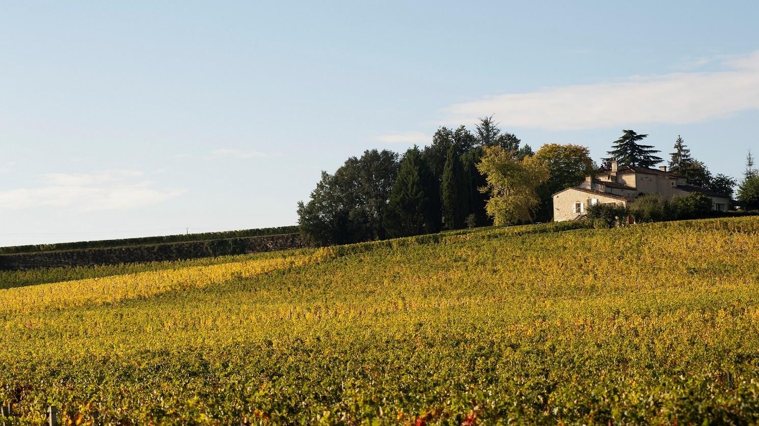 Le Château et ses vignes - © J. Buchholtz